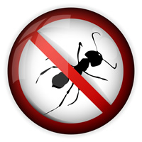 Pest Inspection Milford CT